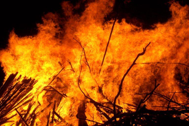 Amazon Rainforests in Danger