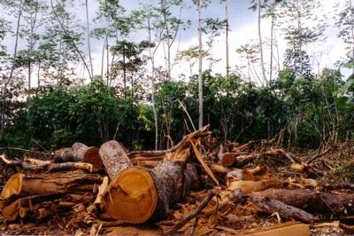 Links Between Loss of Forests, Viruses & Climate Change